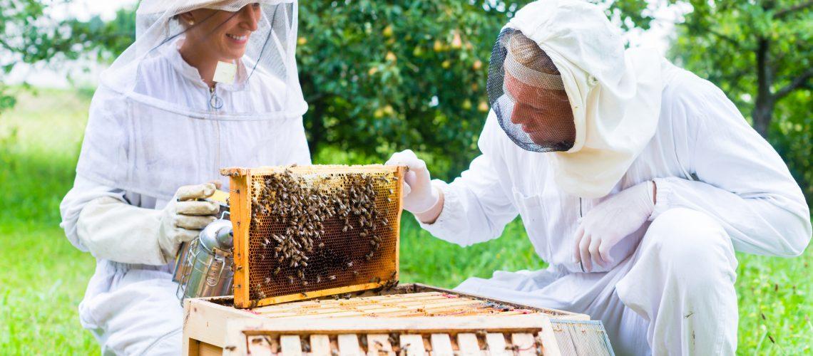 pszczelarz przy ulu